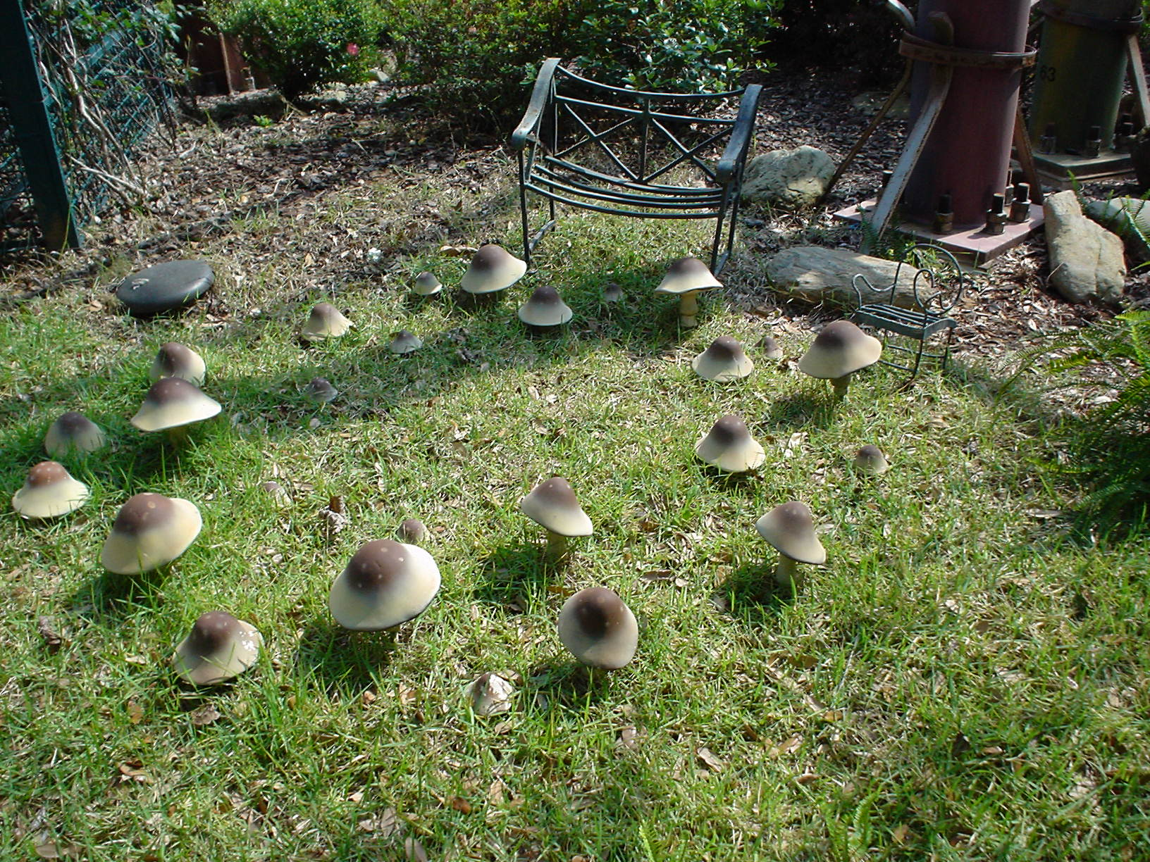 Mushroom Village Ricky Hanson